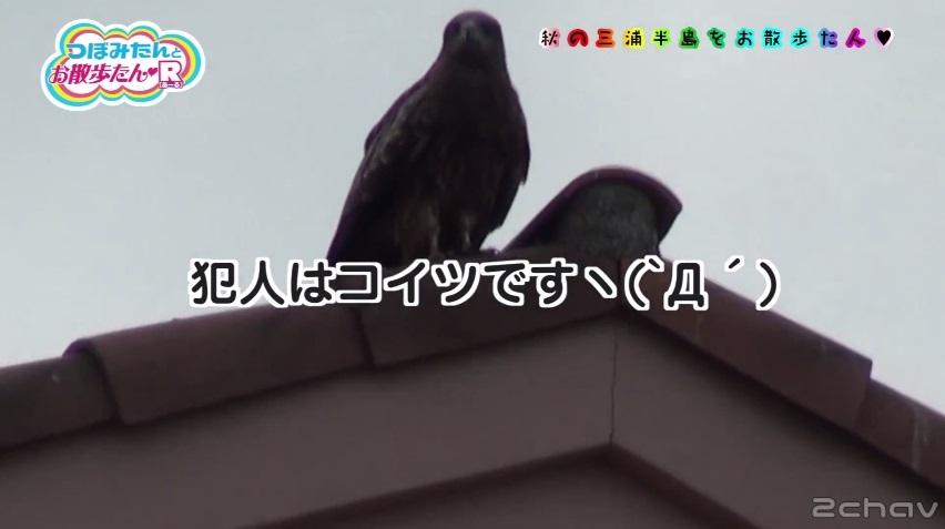 つぼみトンビ005