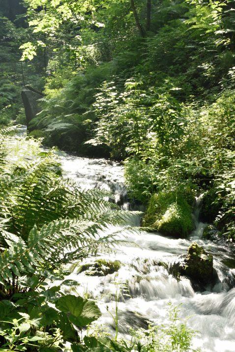 白糸の滝 渓流