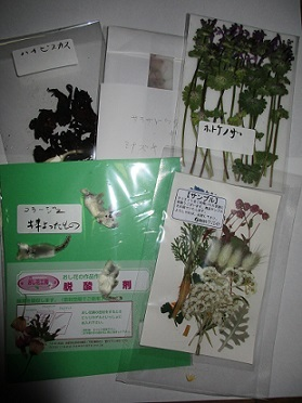 届いたおし花たち 2