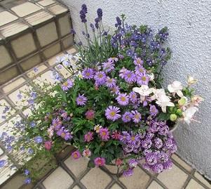 春の寄せ植え (2)