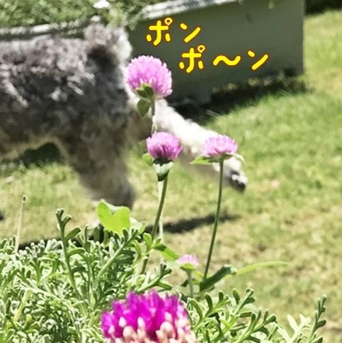 IMG_4640-11.jpg