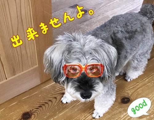 IMG_4824-1_20170823013120aff.jpg