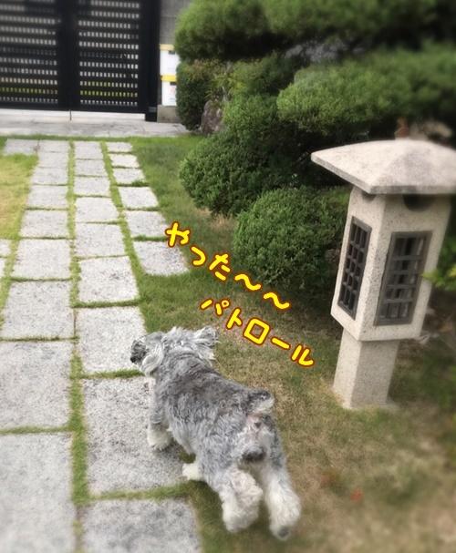 IMG_6282-1.jpg