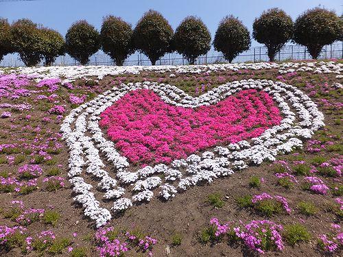 20170424みさと芝桜公園2