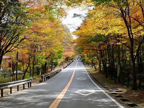 軽井沢、国道146号線の紅葉のトンネル1