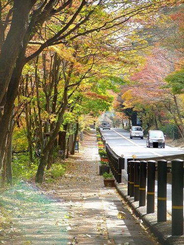 軽井沢、国道146号線の紅葉のトンネル2