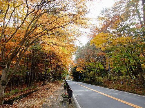 軽井沢、国道146号線の紅葉のトンネル3
