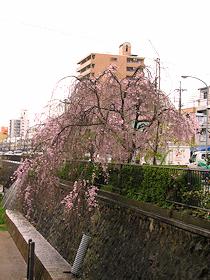 shizuku_sorekara1021.jpg