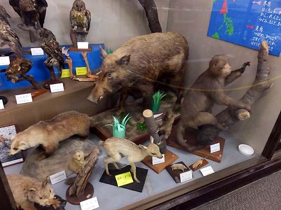 高岡古城公園自然資料館の哺乳類の剥製
