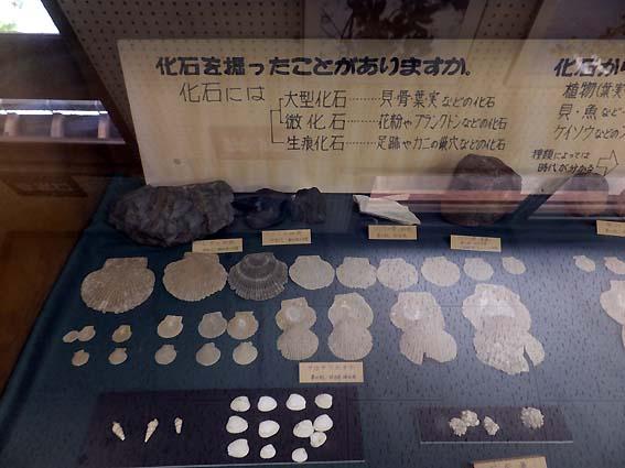 高岡市の化石