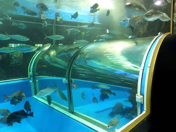 日本で最初の全面アクリル製トンネル