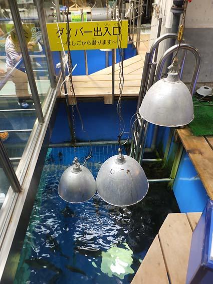 魚津水族館バックヤードコーナー