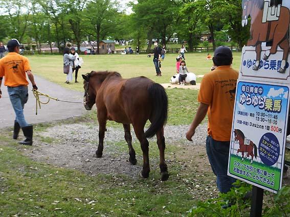 富山市ファミリーパークの乗馬広場