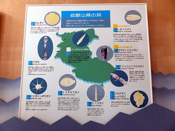 和歌山の貝