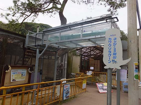 池田動物園のカワウソラグーン
