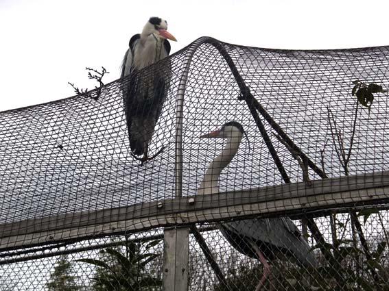 池田動物園で見かけた「内と外」