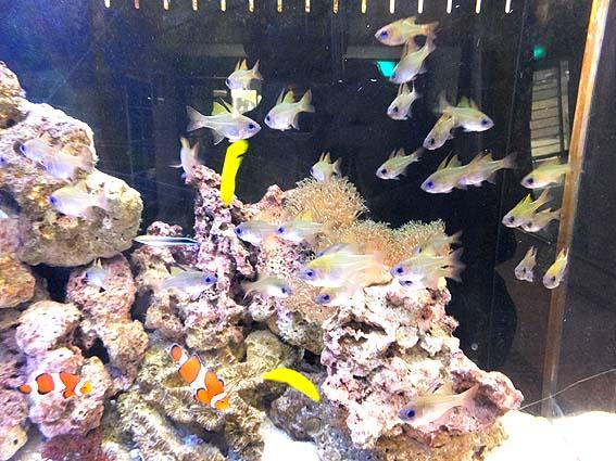 鮮やかな熱帯魚@渋川マリン水族館