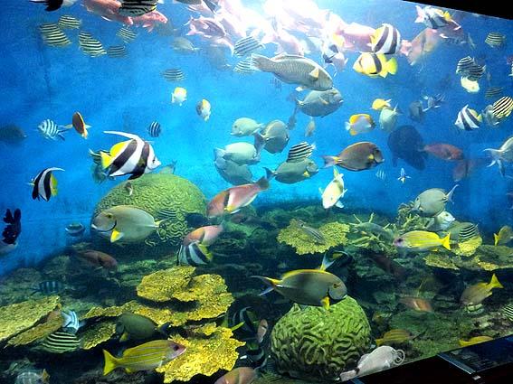渋川マリン水族館の大水槽