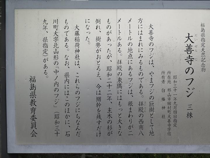 大善寺の藤
