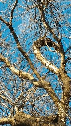 0102木の形