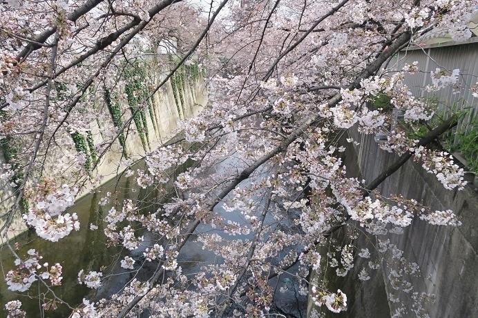 神田川 面影橋から