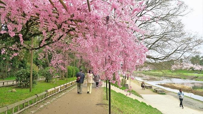 なからぎの道と賀茂川