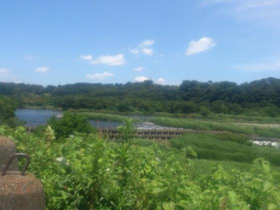 相模川でガサガサ!