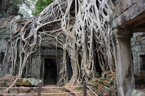カンボジア④20170618(タ プローム) (37)