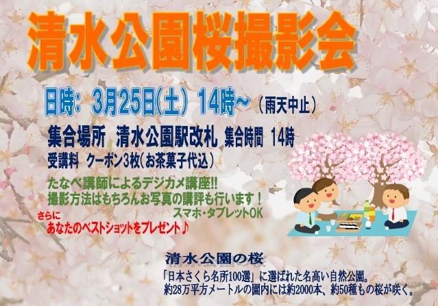 清水公園桜撮影会20170325