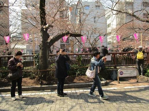 目黒川散歩03