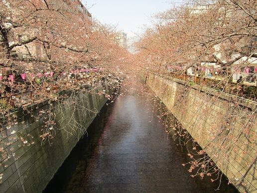 目黒川散歩04