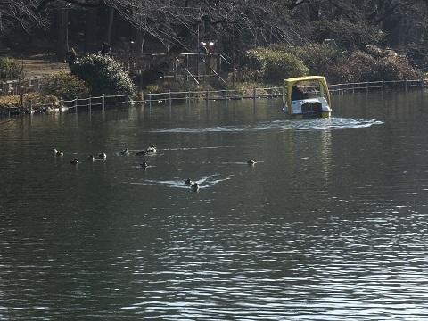 カモと足漕ぎボート