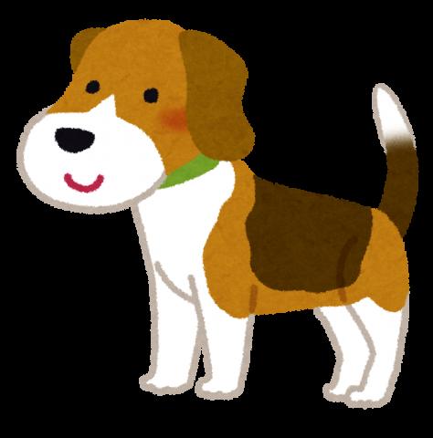 dog_beagle.png