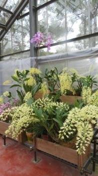 2017 2 26 植物公園 緑花センター (温室)