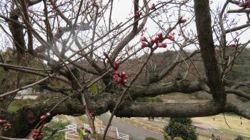2017 2 26 植物公園 緑花センター