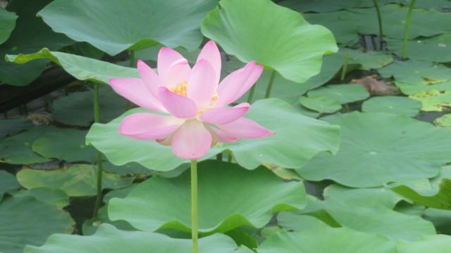 2017 7 24 有田川鉄道公園