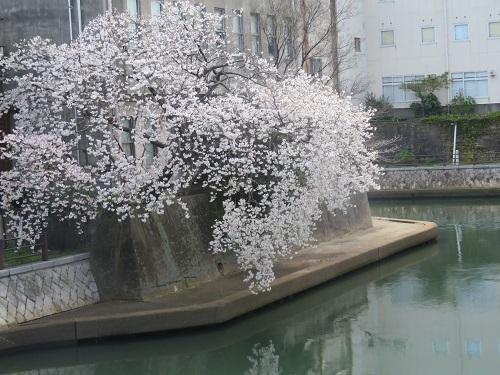 2017 9 9   神戸どうぶつ王国