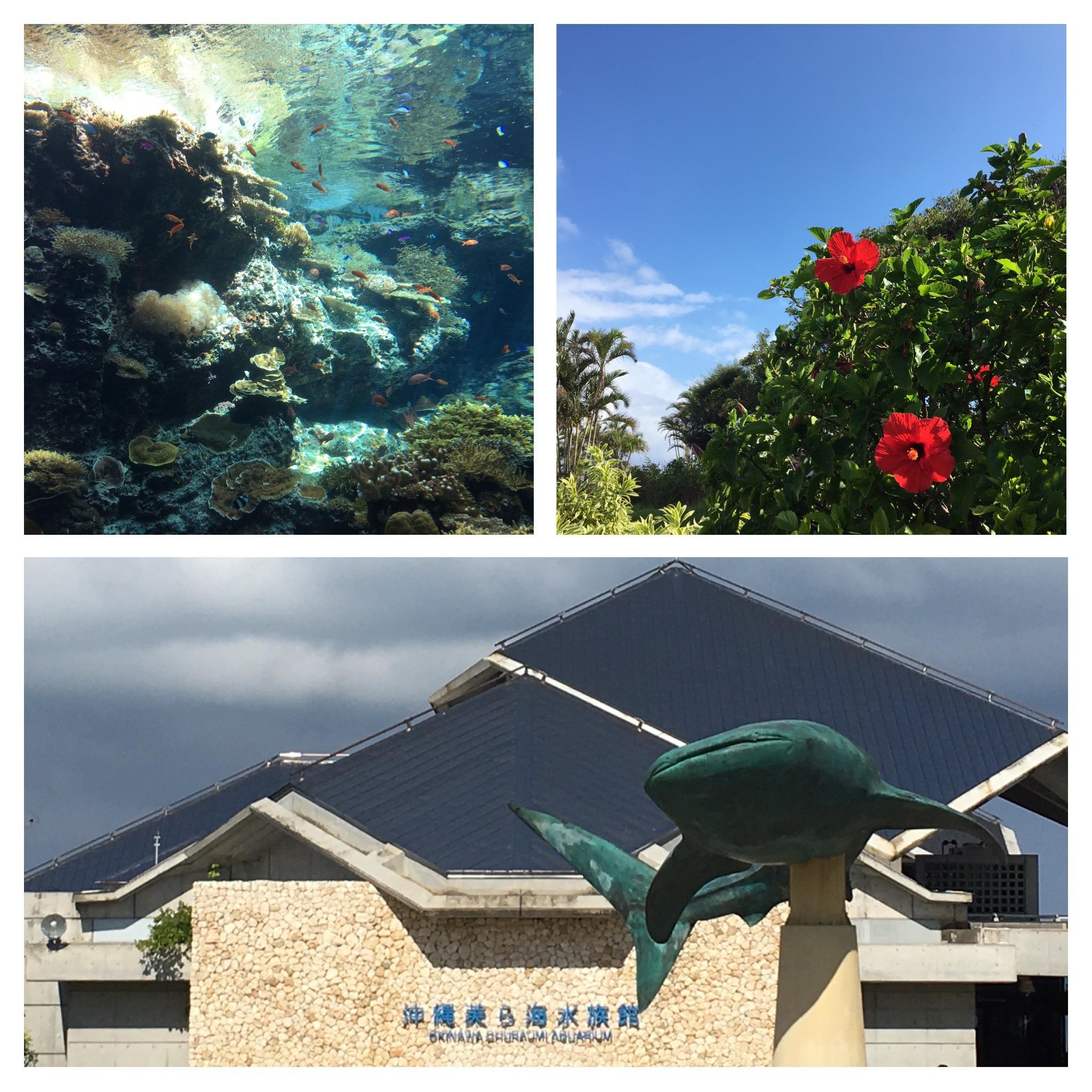 2美ら海水族館