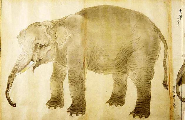 享保の象 狩野古信
