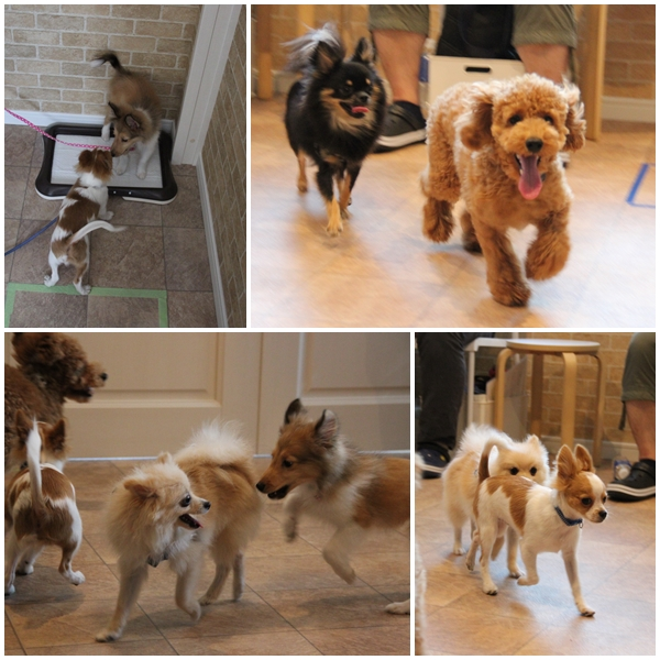 20170528PUPPYPARTY