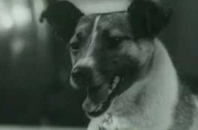ライカ犬2