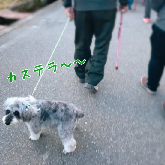 IMG_4183-1.jpg