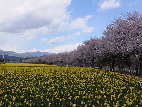 20170419岩井親水公園1