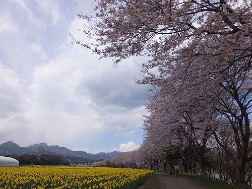 20170419岩井親水公園3