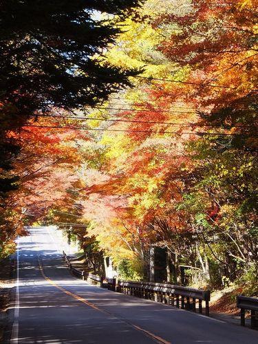 軽井沢、国道146号線の紅葉のトンネル4
