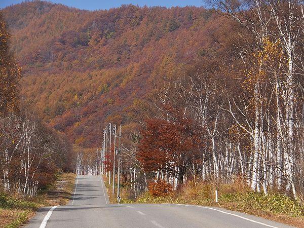 20151020八千穂高原の紅葉と白樺