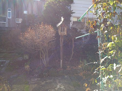 20171107草津温泉民泊花栞(はなしおり)庭の鳥の餌箱取替1