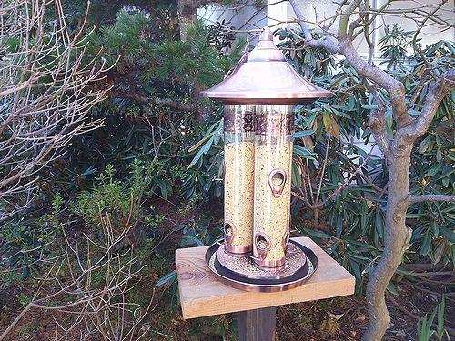 20171107草津温泉民泊花栞(はなしおり)庭の鳥の餌箱取替7