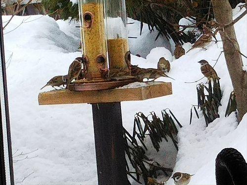 20180212草津温泉民泊花栞(はなしおり)庭の鳥の餌箱2