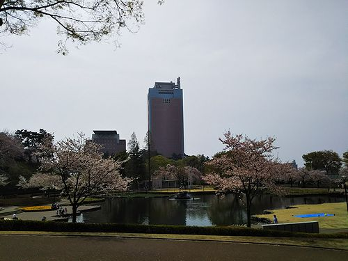 20180403群馬県前橋公園の桜1